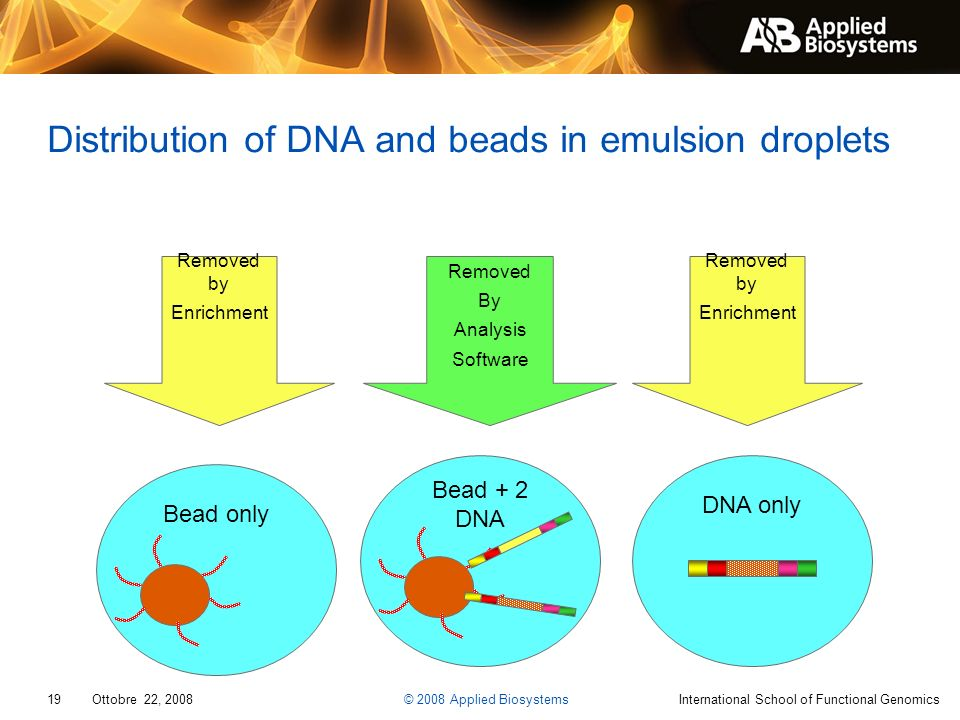 Distribution of DNA and beads in emulsion droplets