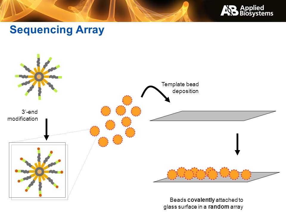Sequencing Array Template bead deposition 3'-end modification