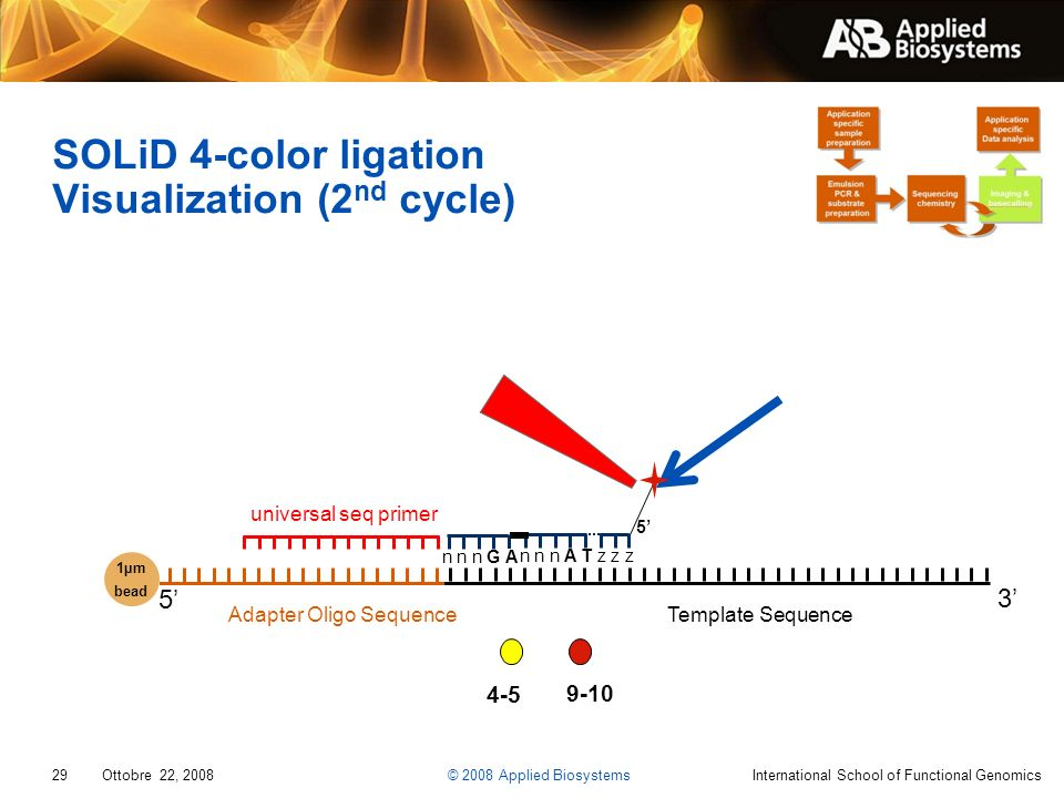 SOLiD 4-color ligation Visualization (2nd cycle)