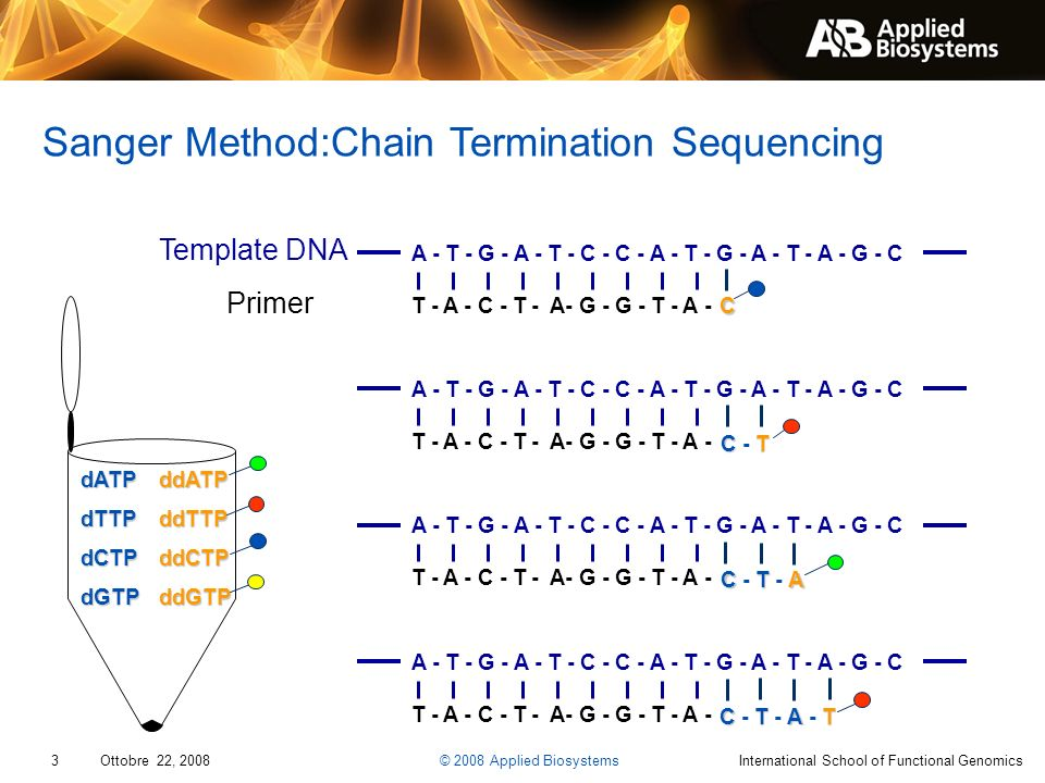 Sanger Method:Chain Termination Sequencing