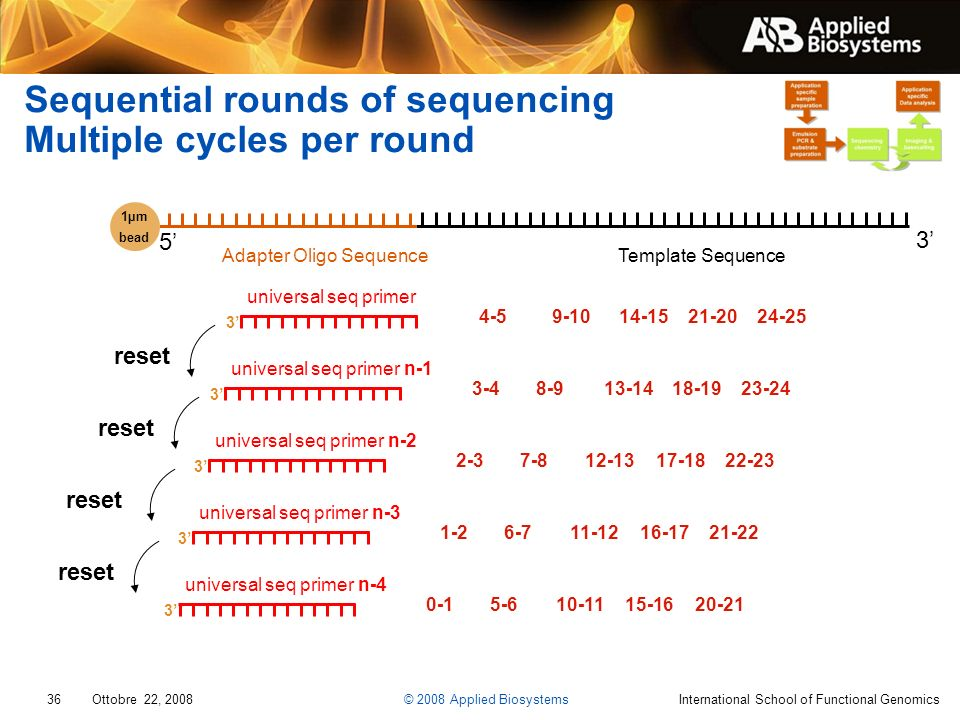 Sequential rounds of sequencing Multiple cycles per round