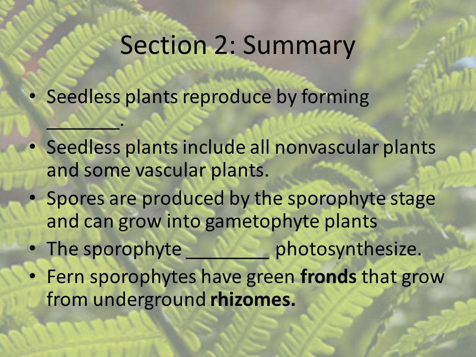 Section 2: Summary Seedless plants reproduce by forming _______.