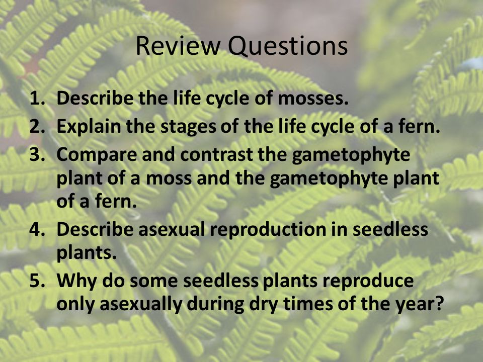 Review Questions Describe the life cycle of mosses.
