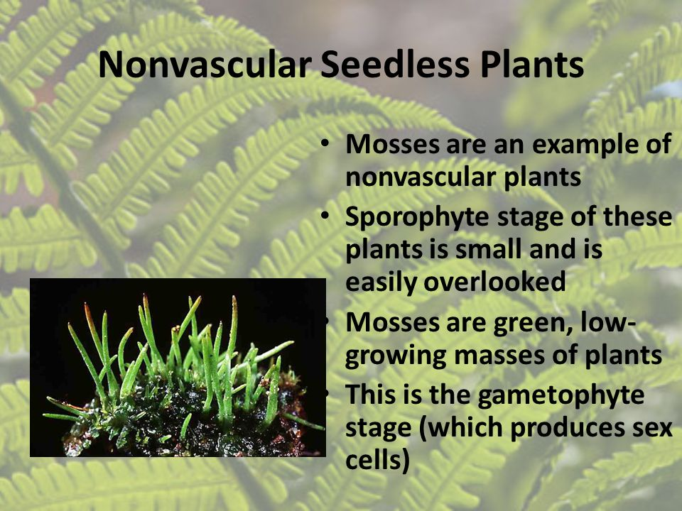 Nonvascular Seedless Plants