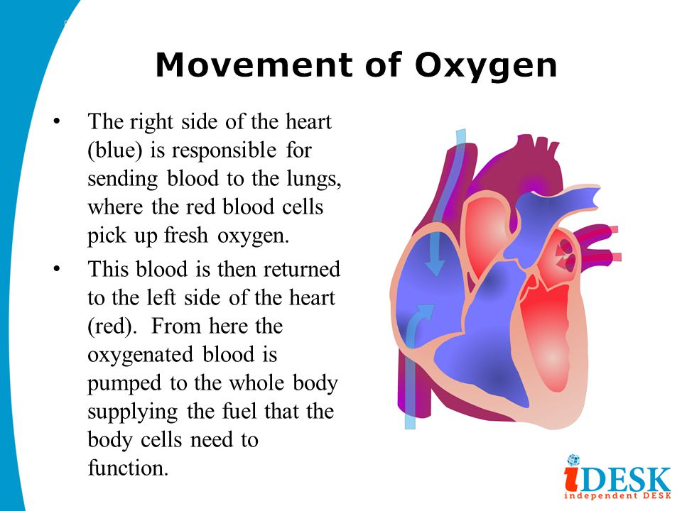 the movement of blood through the Movement of blood through the heart there are nine steps for the blood to move throughout the heart step one is that the deoxygenated blood enters the heart through.