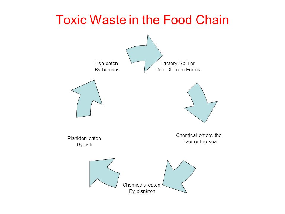 Toxic Waste in the Food Chain