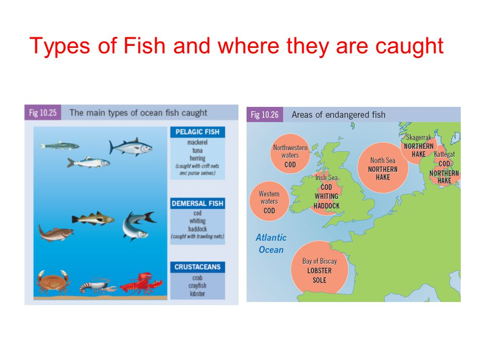 Types of Fish and where they are caught