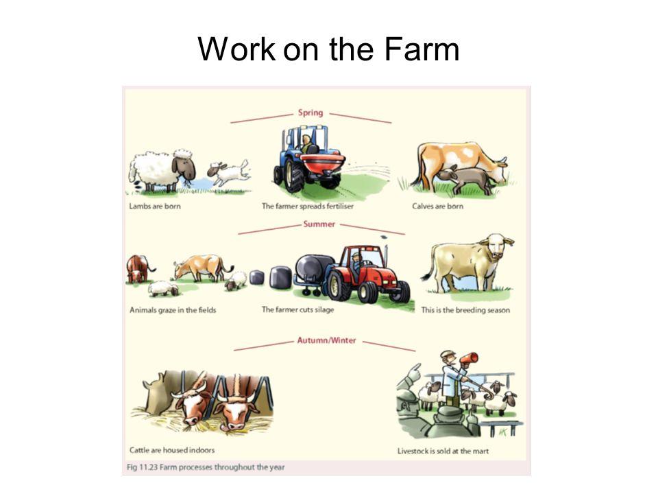 Work on the Farm