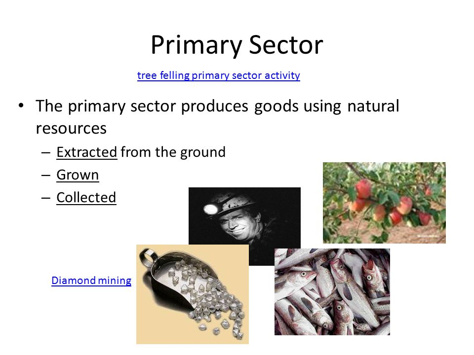 the primary sector Primary sector the part of the economy concerned with the extraction of raw materials and the provision of agricultural crops and animal produce.