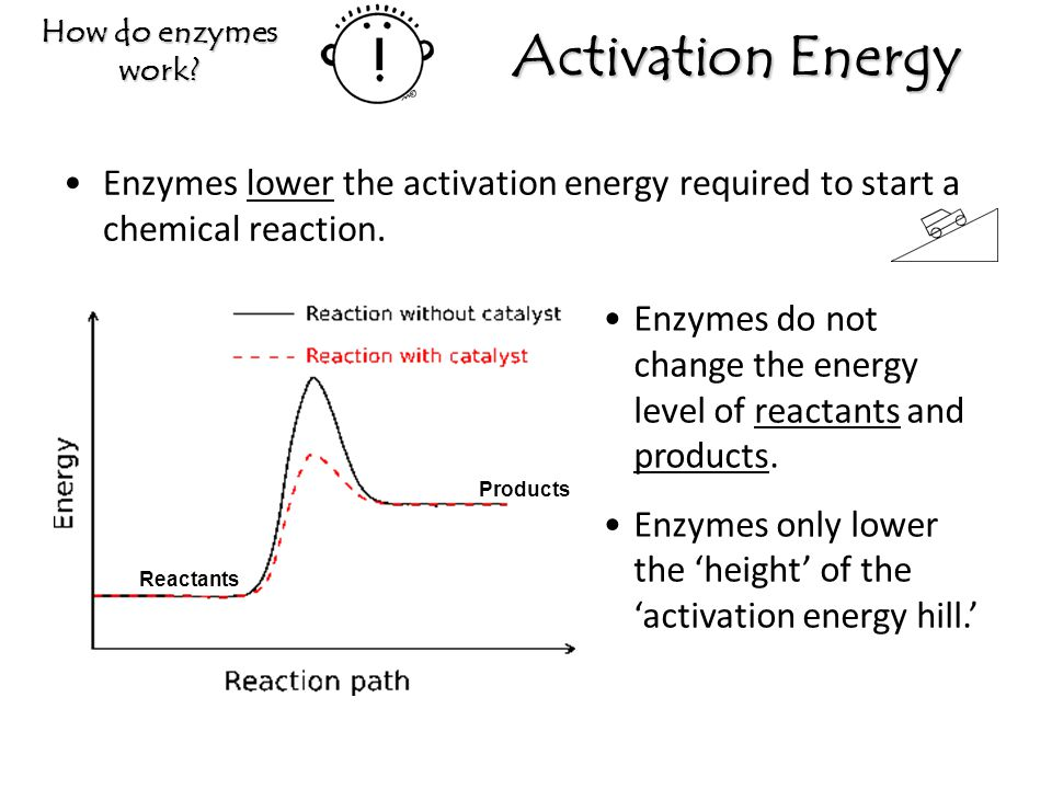 How do enzymes work Activation Energy. Enzymes lower the activation energy required to start a chemical reaction.