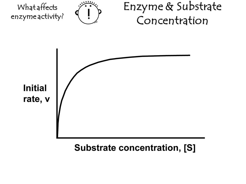 enzyme concentration and enzyme activity essay
