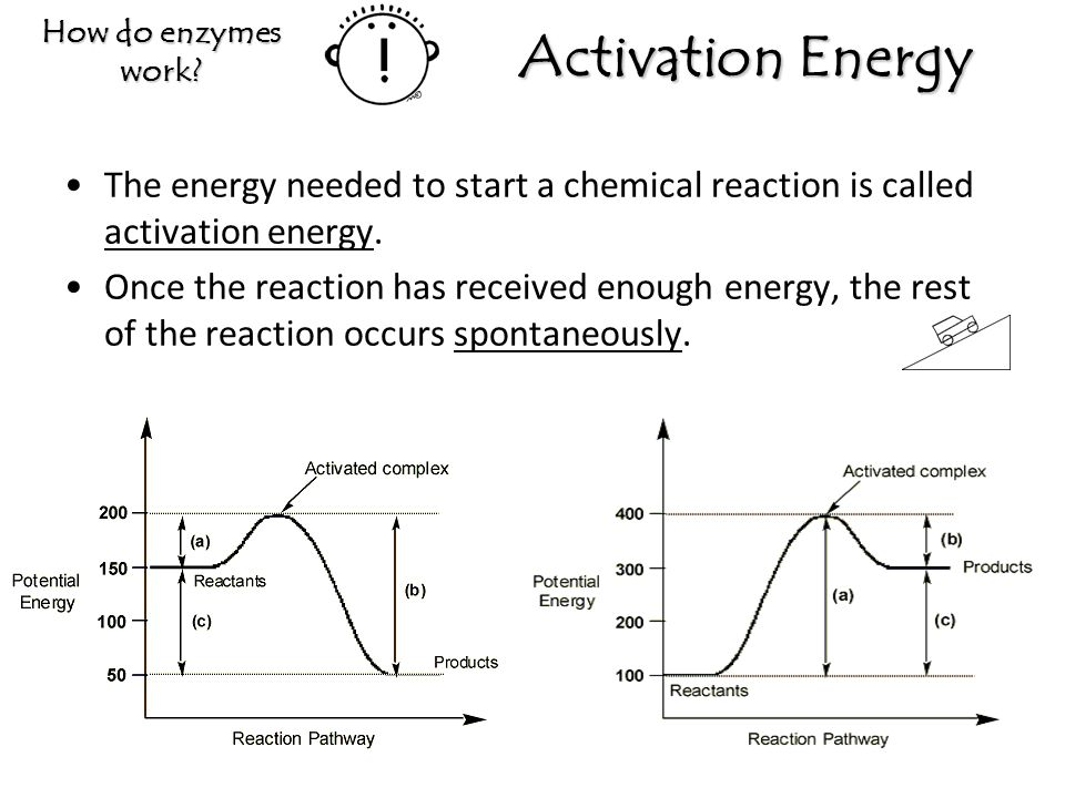 How do enzymes work Activation Energy. The energy needed to start a chemical reaction is called activation energy.