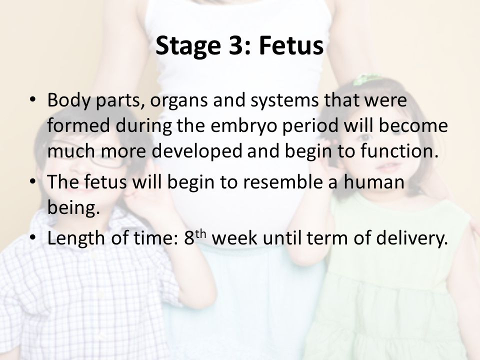 Stage 3: Fetus Body parts, organs and systems that were formed during the embryo period will become much more developed and begin to function.