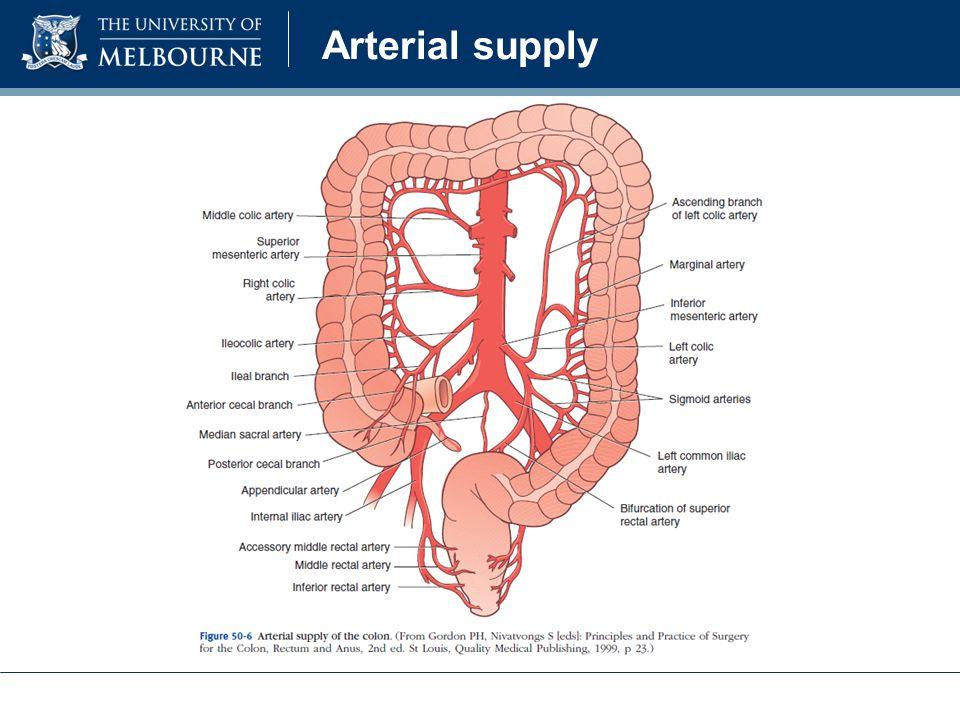 Colon vascular anatomy 9582195 - togelmaya.info