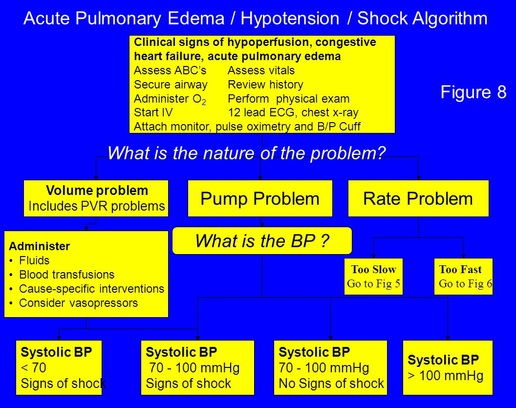 Acute Pulmonary Edema / Hypotension / Shock Algorithm