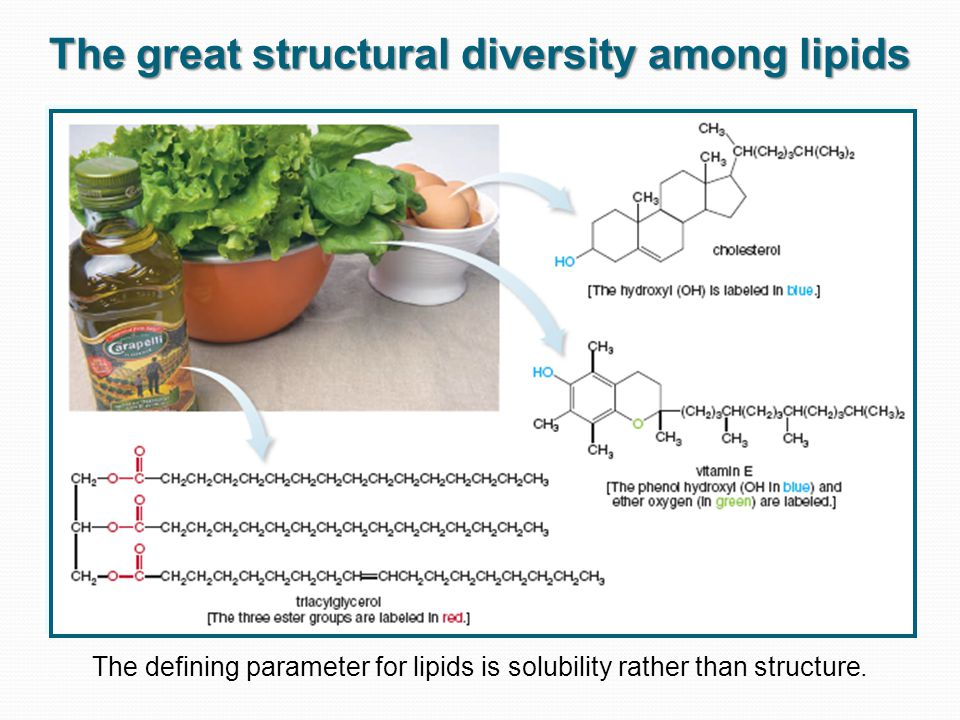 The great structural diversity among lipids