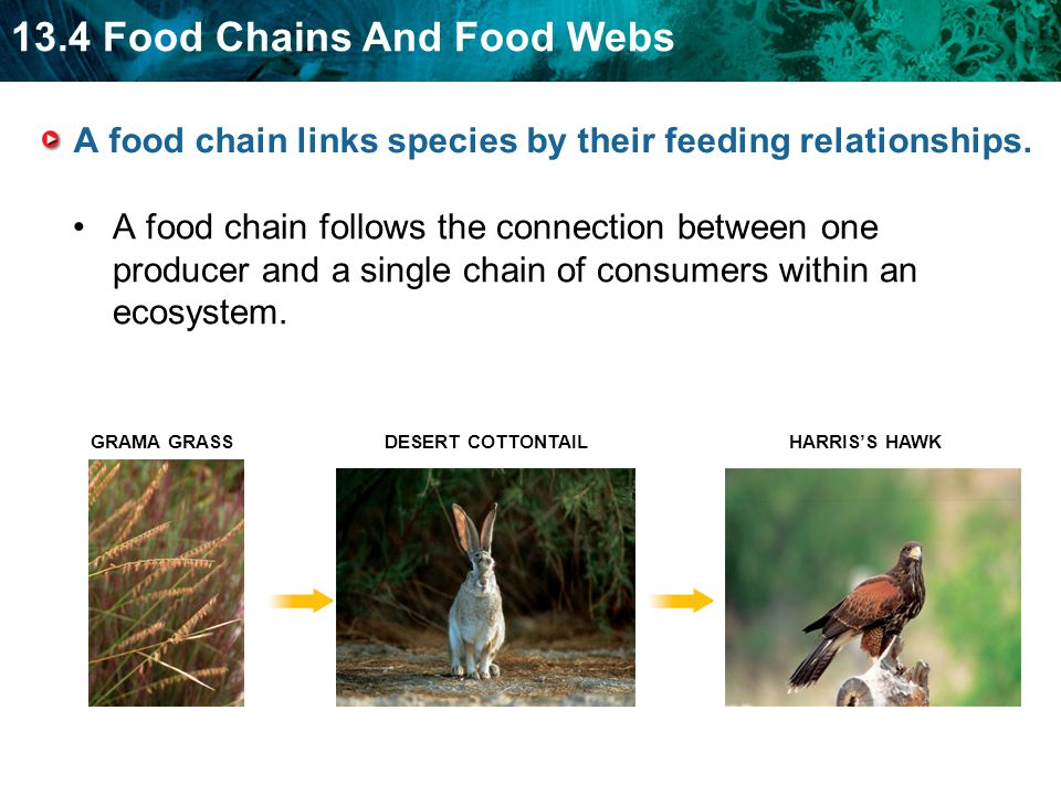Consumers are not all alike. Herbivores eat only plants ...