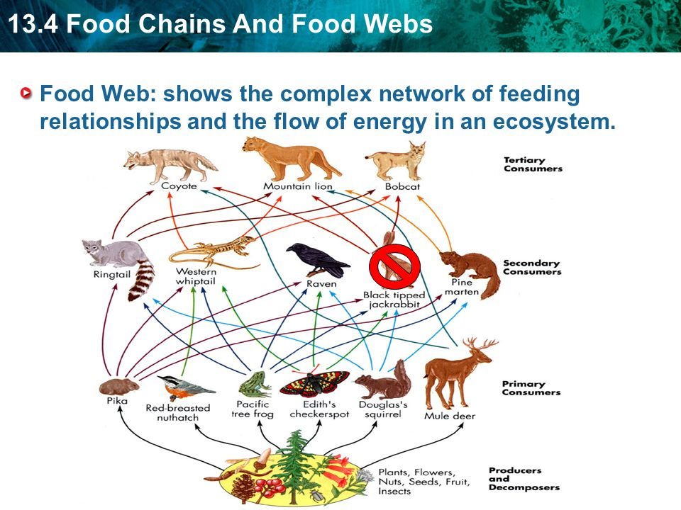 food chains, or food webs, as they are sometimes called in recognition of  their complexity, are part of life in the african savanna, just as they are  in