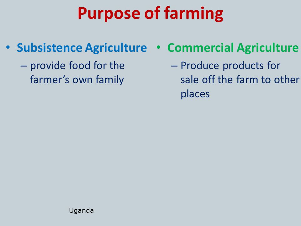 commercial vs subsistence agriculture Commercial agriculture and profitable small and medium enterprises must be aims to promote commercial agriculture as an alternative to subsistence agriculture.