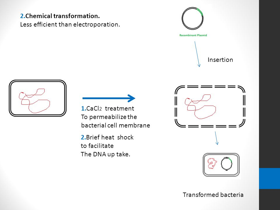 A lab report on the growth of bacteria in a conjugation and transformation experiment