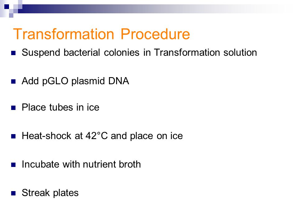 genetic transformation by heat shock Pglo transformation and inquiry kit that has undergone genetic transformation (literally change rapidly heat and cool the bacteria in a process known as heat shock during which the plasmid dna enters the bacteria c.