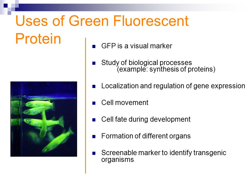 expression and purification of recombinant green fluorescent protein Fluorescent protein bacterial expression vectors - free download as pdf file (pdf), text file (txt) or read online for free fluorescent protein bacterial.