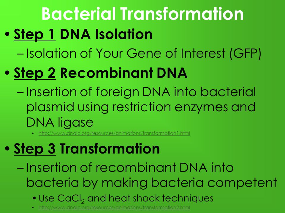 bacterial plasmid transformation and isolation Plasmid transformation lab report transformation lab report introduction transformation is the transfers of virulence from one cell to another, through the transferring of genetic material it was originally postulated in 1928 through the works of federick griffith, a british microbiologist.