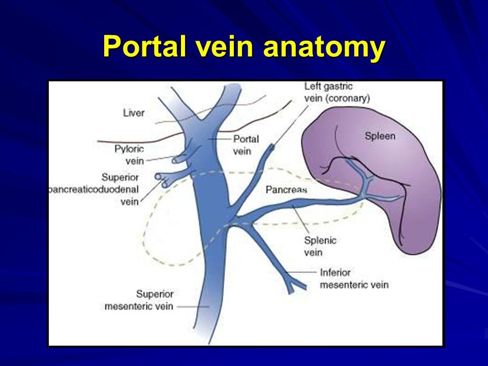 Anatomy portal vein