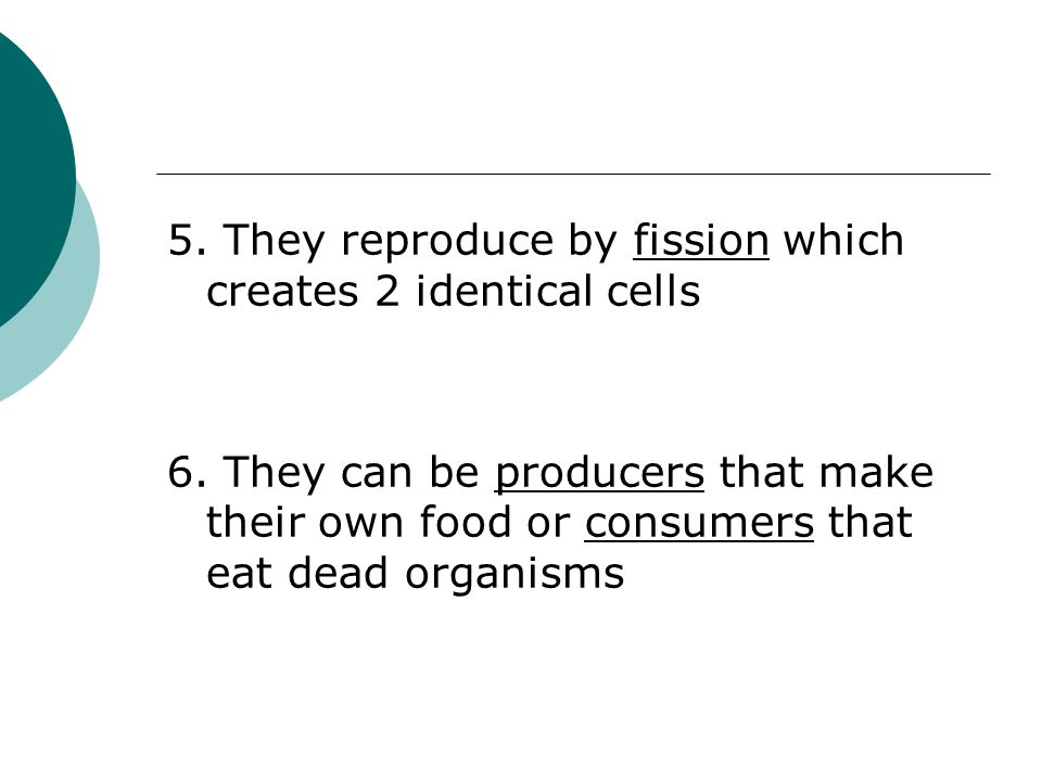 5. They reproduce by fission which creates 2 identical cells