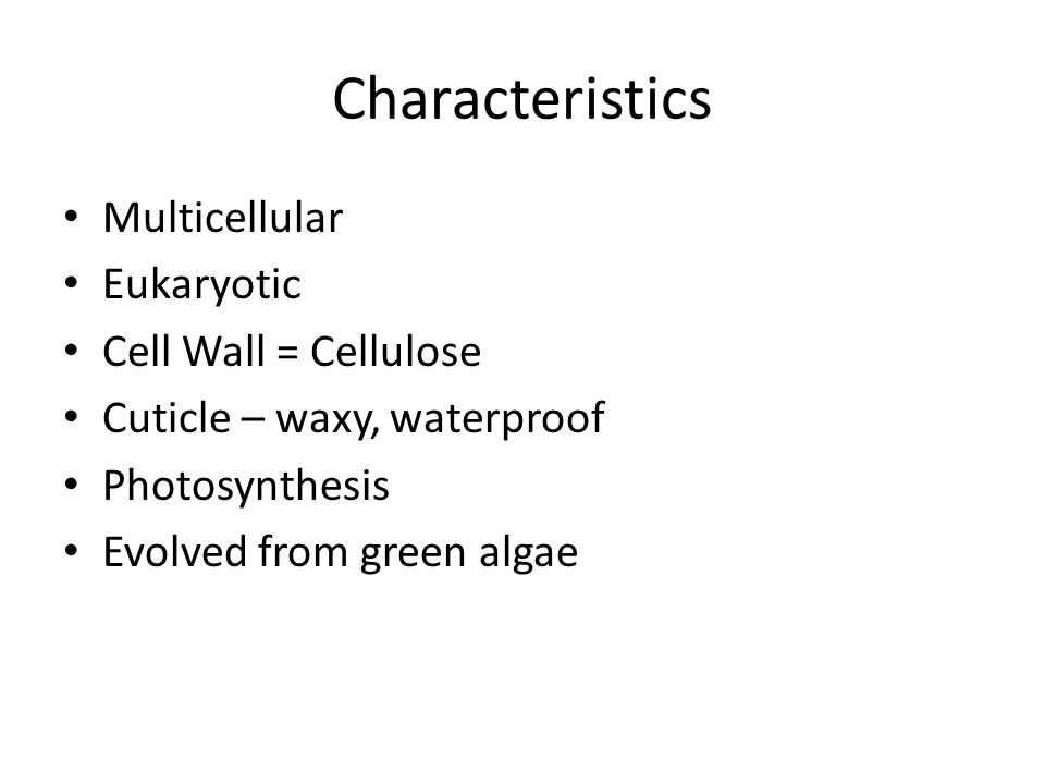 Characteristics Multicellular Eukaryotic Cell Wall = Cellulose