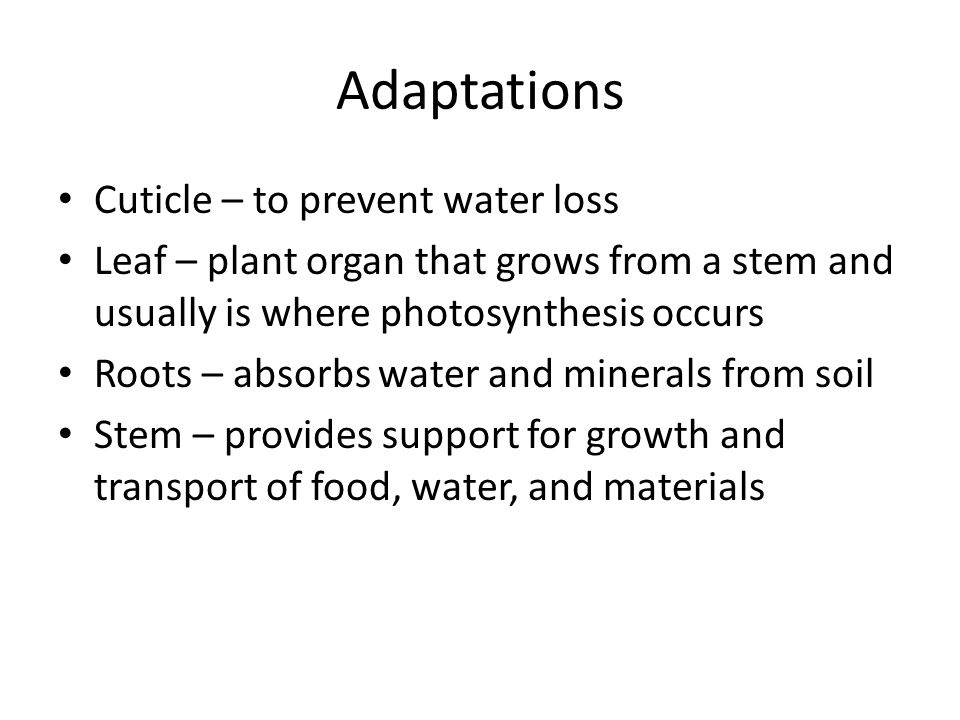 Adaptations Cuticle – to prevent water loss
