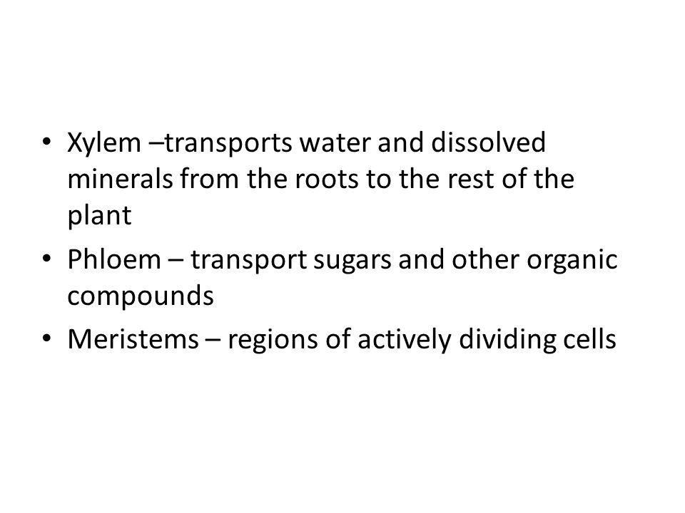 Xylem –transports water and dissolved minerals from the roots to the rest of the plant