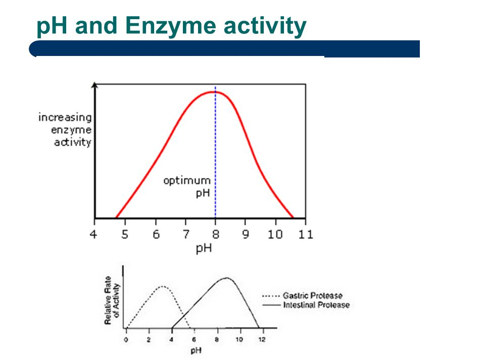 amylase activity effect of ph The effects of the temperature of amylase on the  this would have had a great effect on the results of our experiment because when the amylase and .