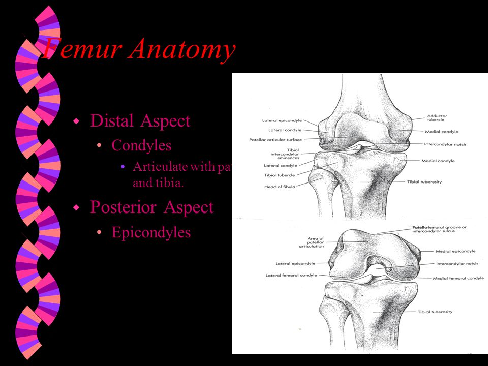 knee and femur distal end Zimmer ®segmental system distal femoral surgical technique intro zimmer segmental system distal femoral sur.