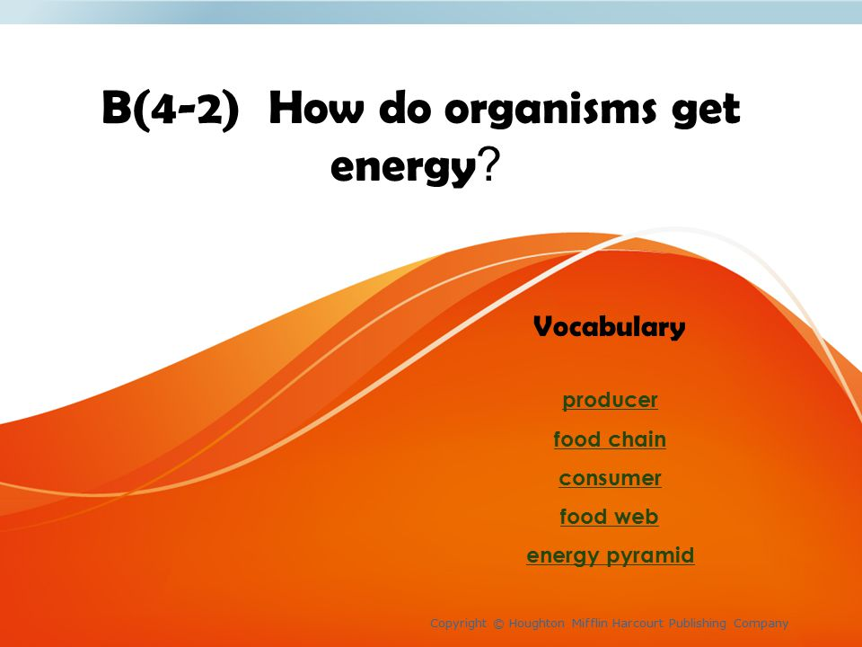 How do organisms get energy