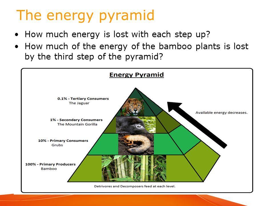 b 4 2 how do organisms get energy   ppt video online