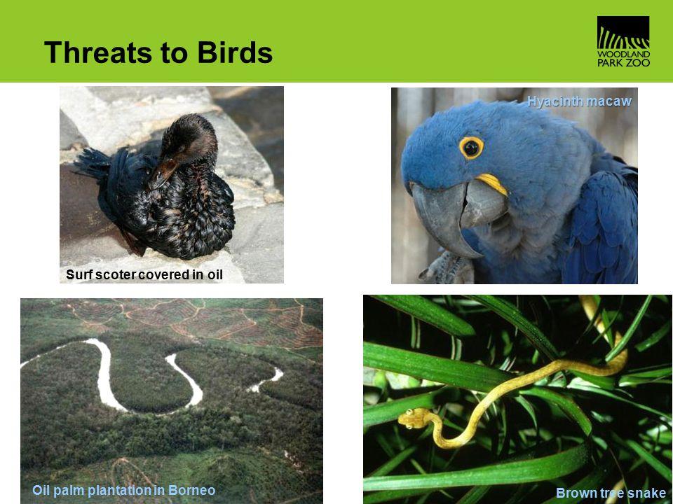 Bird Basics Ppt Video Online Download