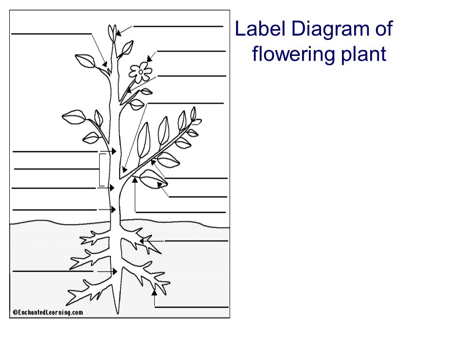 Structure of Flowering Plants - ppt video online download