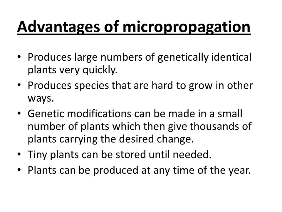 Advantages of micropropagation