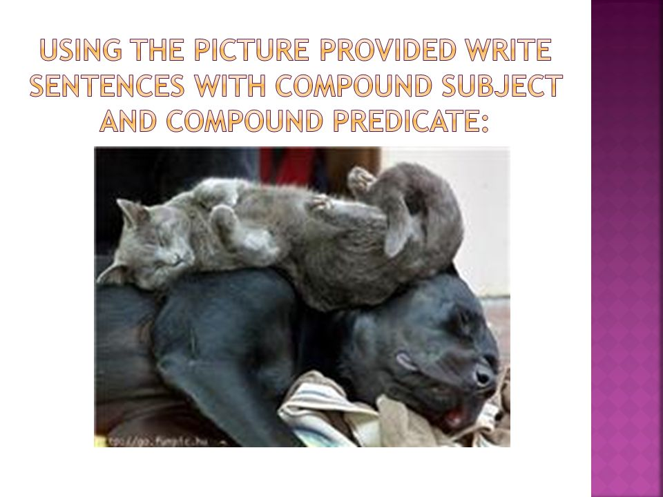Using the picture provided write sentences with compound subject and compound predicate: