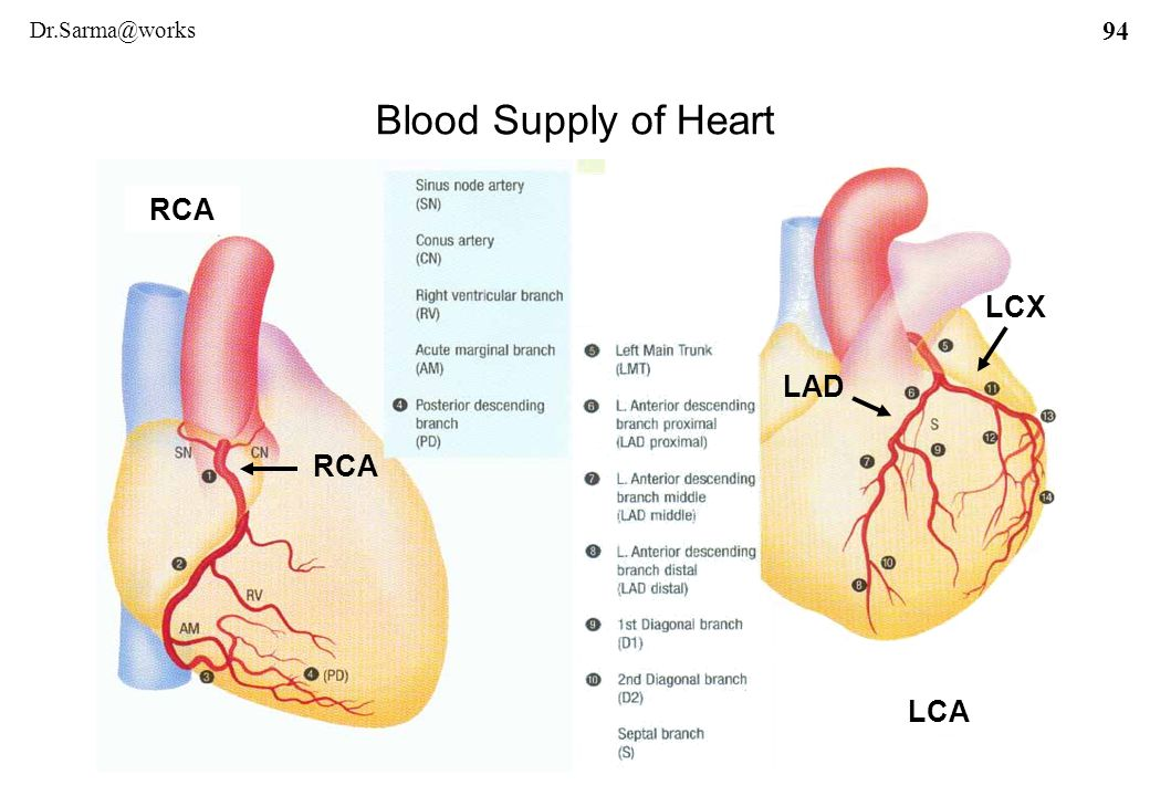 List of Synonyms and Antonyms of the Word: lcx heart