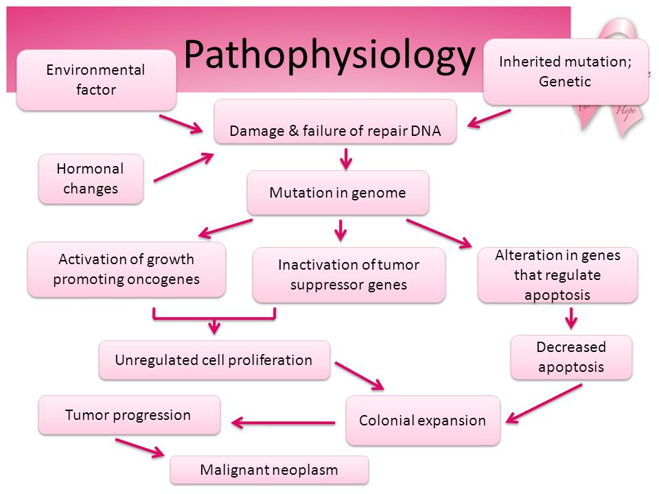 Understanding the etiology and pathogenesis of cancer