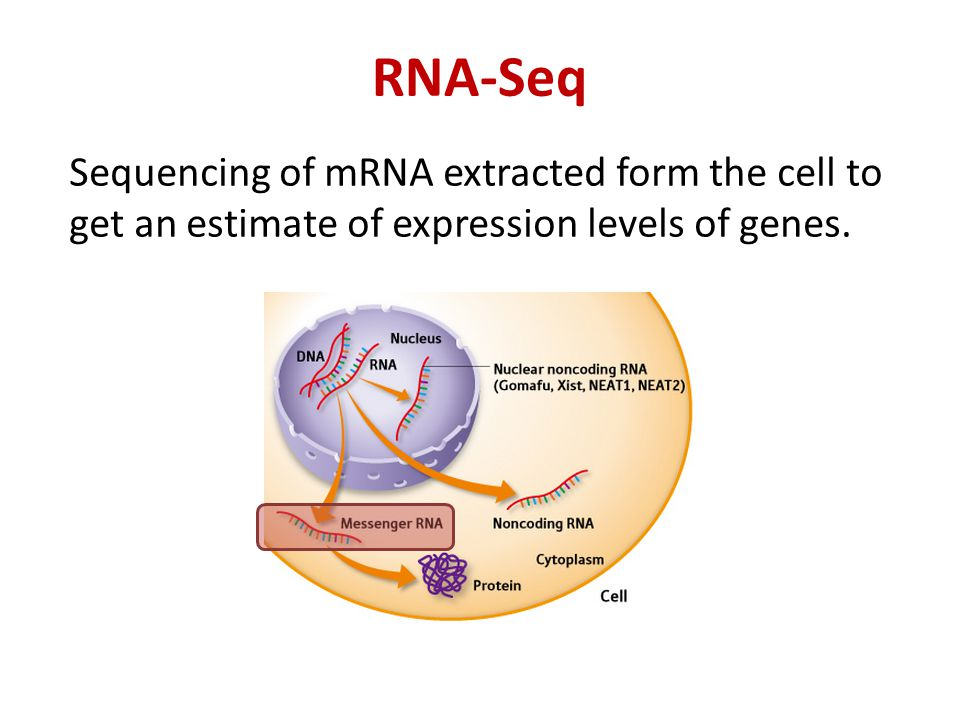RNA-Seq Sequencing of mRNA extracted form the cell to get an estimate of expression levels of genes.