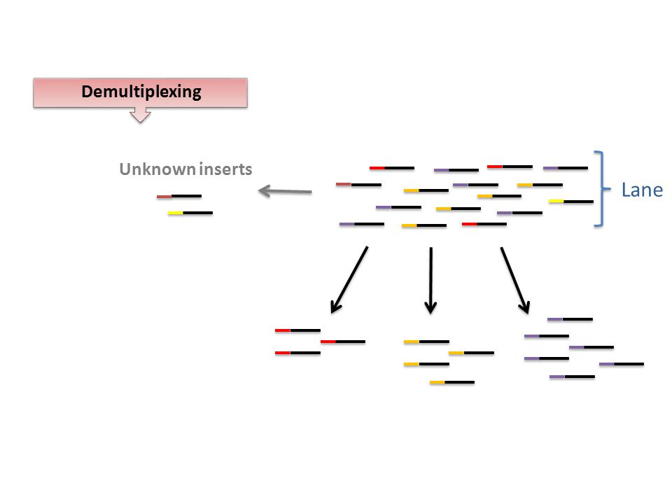 Demultiplexing Lane Unknown inserts