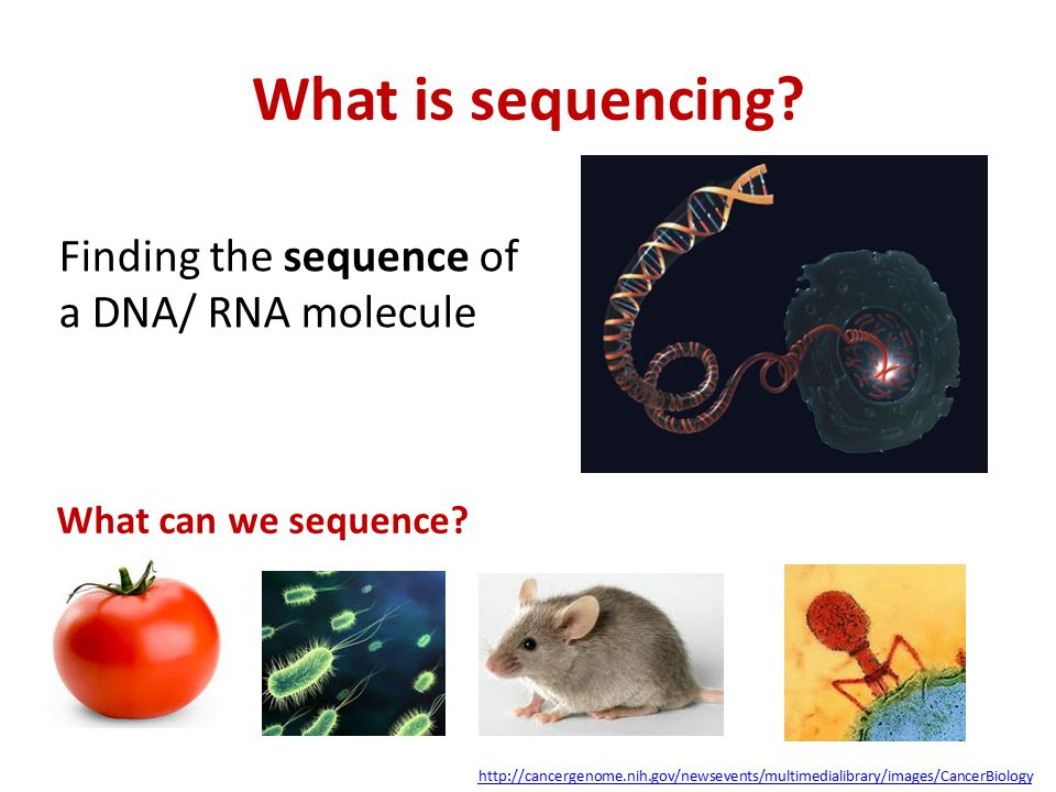 What is sequencing Finding the sequence of a DNA/ RNA molecule
