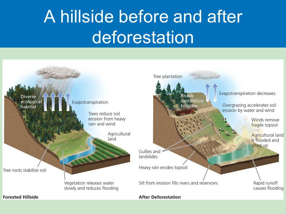 A hillside before and after deforestation