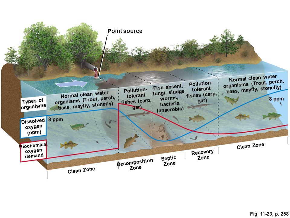 Point source Normal clean water organisms (Trout, perch, bass, mayfly, stonefly) Pollution- tolerant fishes (carp, gar)