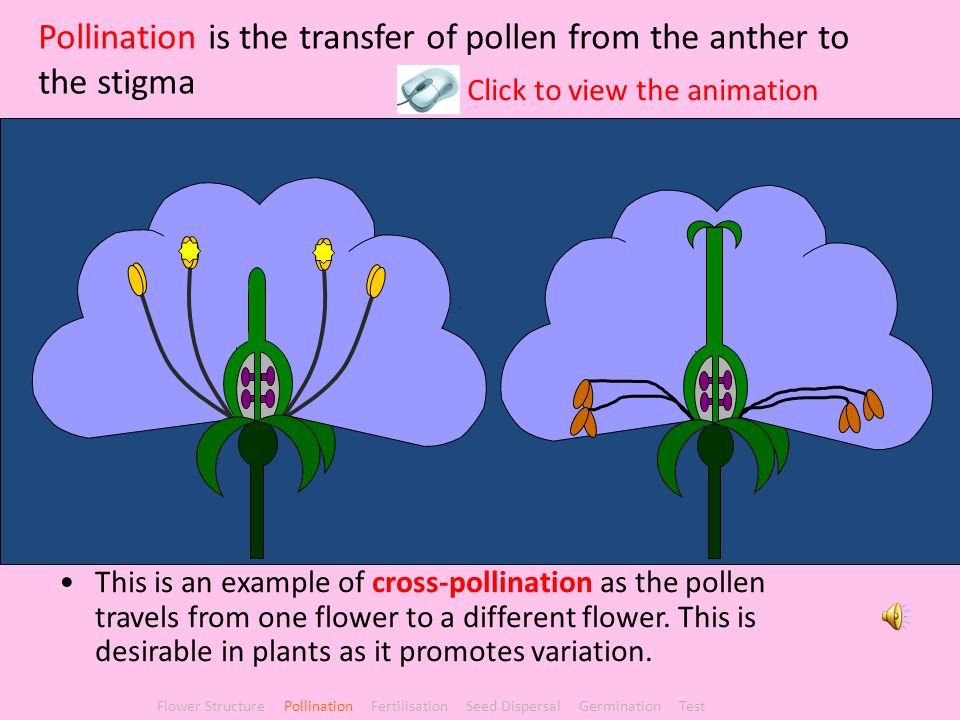Pollination is the transfer of pollen from the anther to the stigma