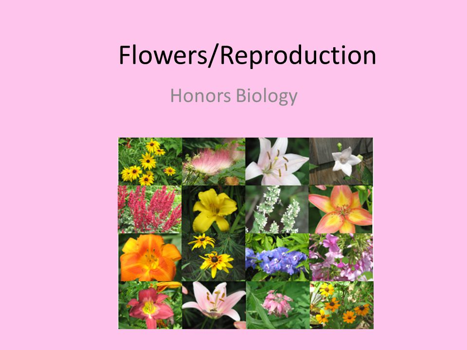 Flowers/Reproduction