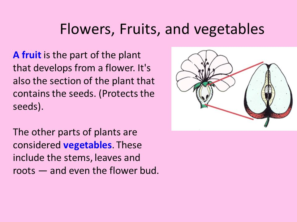 Flowers, Fruits, and vegetables